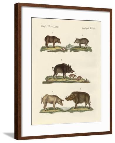 Different Kinds of Pigs--Framed Art Print