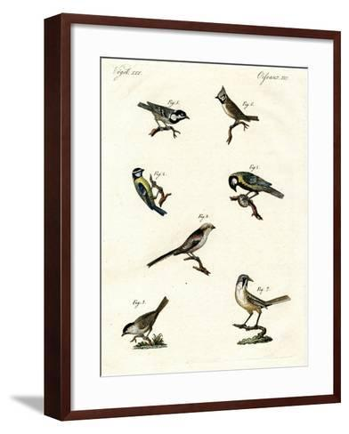 Different Kinds of Tits--Framed Art Print