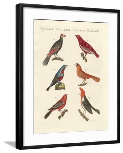 Foreign Beautiful Birds--Framed Art Print