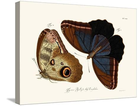 Butterflies, 1783-1806--Stretched Canvas Print
