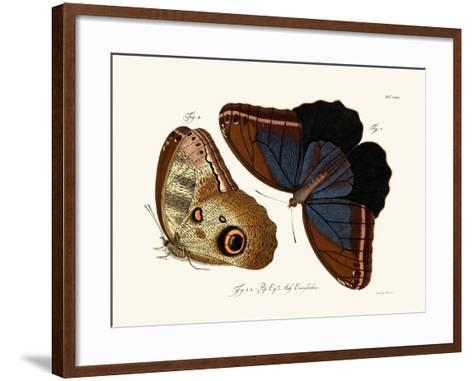 Butterflies, 1783-1806--Framed Art Print