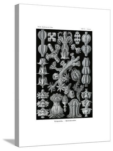 Gorgonida, 1899-1904--Stretched Canvas Print