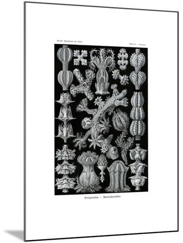Gorgonida, 1899-1904--Mounted Giclee Print