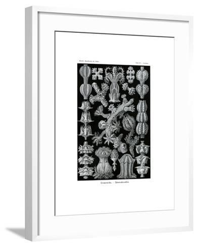 Gorgonida, 1899-1904--Framed Art Print