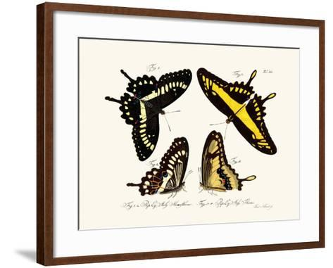 Butterflies, 1783-1806--Framed Art Print