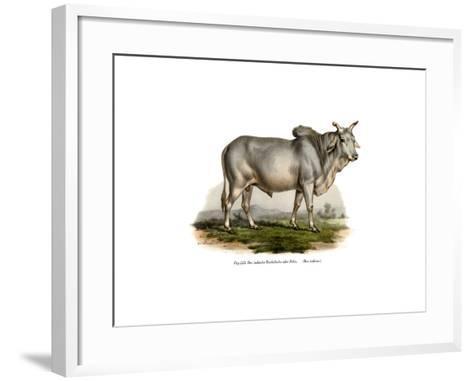 Malian Zebu Cow, 1860--Framed Art Print