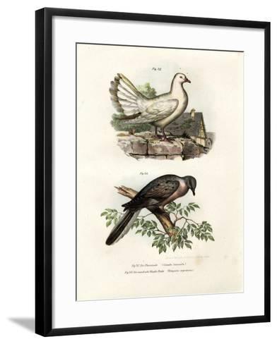 Peacock Pigeon, 1864--Framed Art Print
