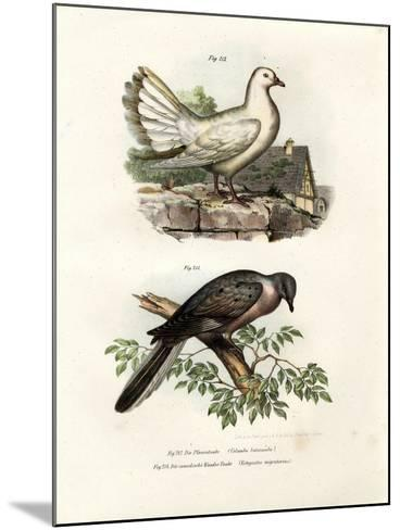 Peacock Pigeon, 1864--Mounted Giclee Print
