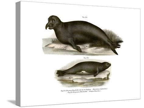 Elephant Seal, 1860--Stretched Canvas Print
