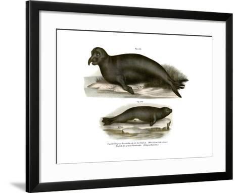 Elephant Seal, 1860--Framed Art Print