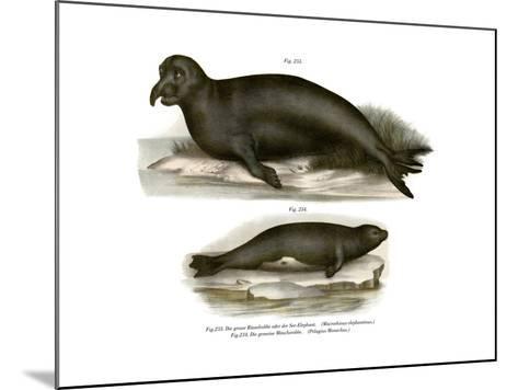 Elephant Seal, 1860--Mounted Giclee Print