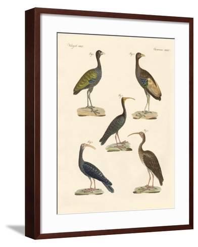 Strange Brasilian Birds--Framed Art Print