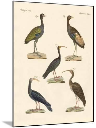 Strange Brasilian Birds--Mounted Giclee Print