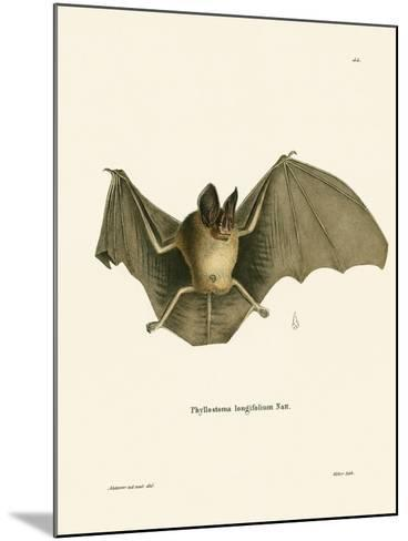Striped Hairy-Nosed Bat--Mounted Giclee Print