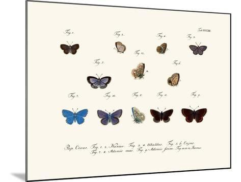 Butterflies, 1783-1806--Mounted Giclee Print
