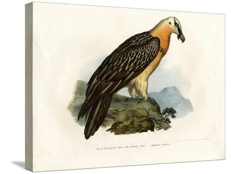 Bearded Vulture, 1864--Stretched Canvas Print