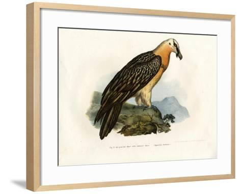Bearded Vulture, 1864--Framed Art Print