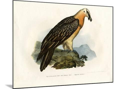 Bearded Vulture, 1864--Mounted Giclee Print