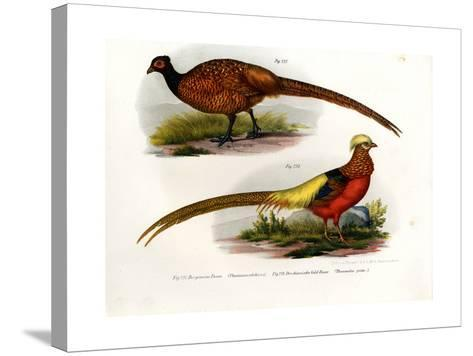 Common Pheasant, 1864--Stretched Canvas Print