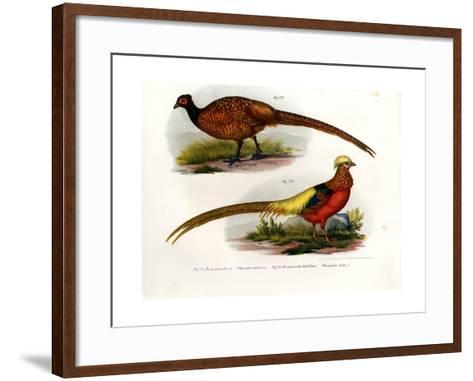 Common Pheasant, 1864--Framed Art Print