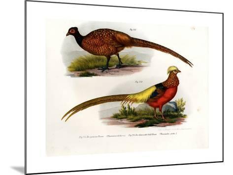Common Pheasant, 1864--Mounted Giclee Print