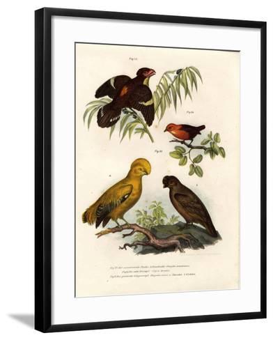 Dusky Broadbill, 1864--Framed Art Print