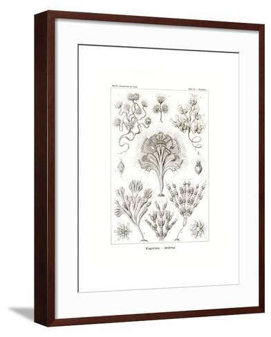 Flagellata, 1899-1904--Framed Art Print