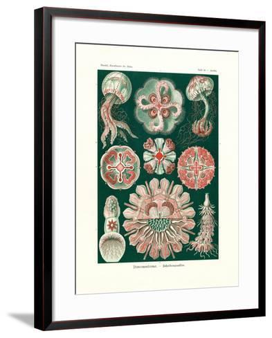 Discomedusae, 1899-1904--Framed Art Print