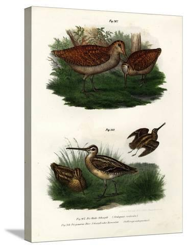 Eurasian Woodcock, 1864--Stretched Canvas Print