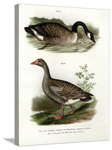 Chinese Goose, 1864--Stretched Canvas Print