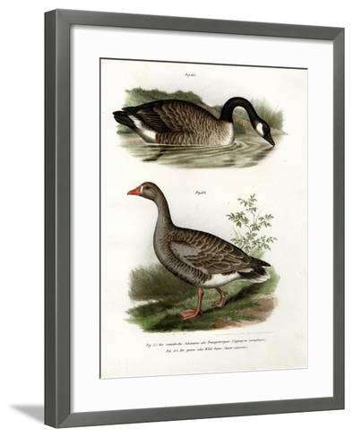 Chinese Goose, 1864--Framed Art Print