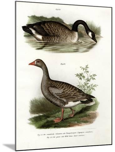 Chinese Goose, 1864--Mounted Giclee Print