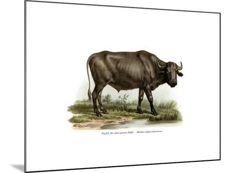 Domestic Buffalo, 1860--Mounted Giclee Print