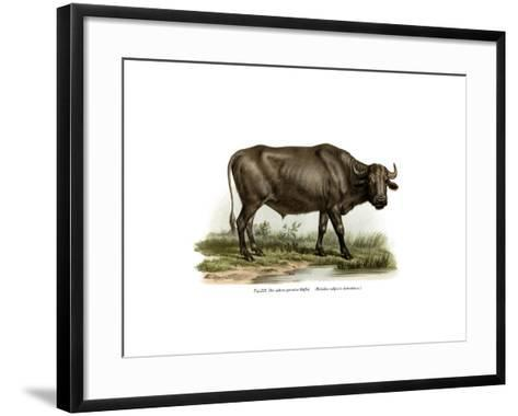 Domestic Buffalo, 1860--Framed Art Print