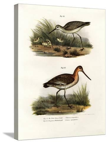 Marsh Sandpiper, 1864--Stretched Canvas Print