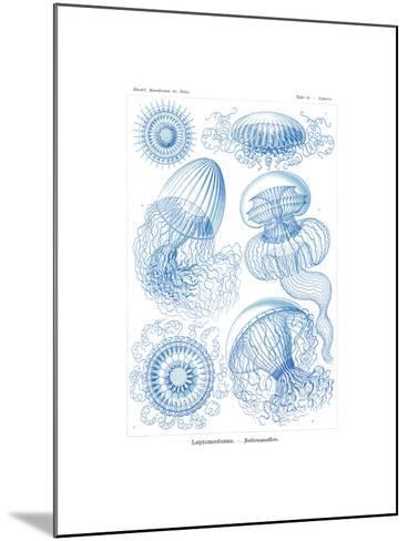 Leptomedusae, 1899-1904--Mounted Giclee Print