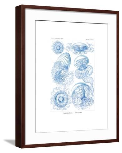 Leptomedusae, 1899-1904--Framed Art Print