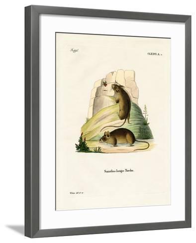 Southern Birch Mouse--Framed Art Print