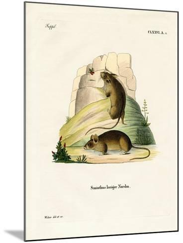 Southern Birch Mouse--Mounted Giclee Print