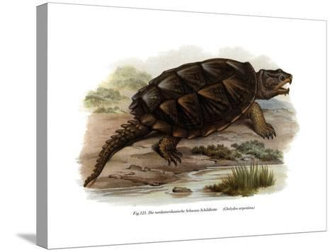 Common Snapping Turtle--Stretched Canvas Print