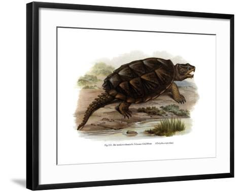 Common Snapping Turtle--Framed Art Print