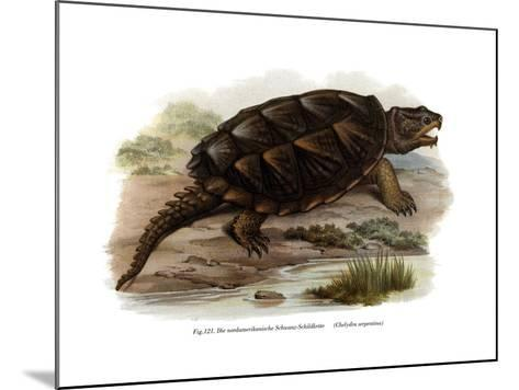 Common Snapping Turtle--Mounted Giclee Print