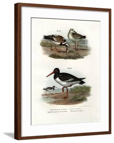 Ruddy Turnstone, 1864--Framed Art Print