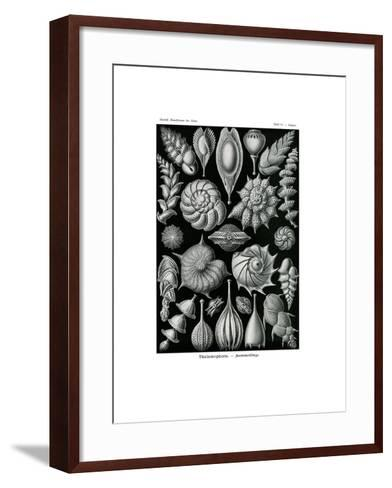 Thalamophora, 1899-1904--Framed Art Print