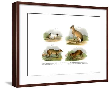 Guinea Pig, 1860--Framed Art Print