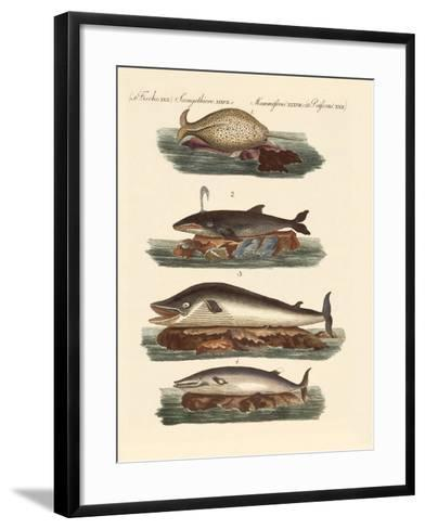 Kinds of Whales--Framed Art Print