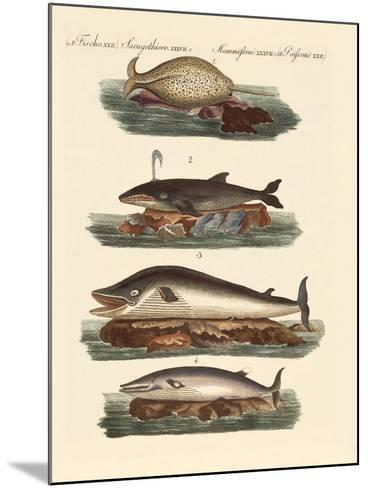 Kinds of Whales--Mounted Giclee Print