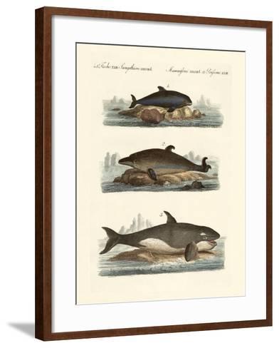 Kinds of Whales--Framed Art Print