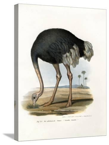 Ostrich, 1864--Stretched Canvas Print