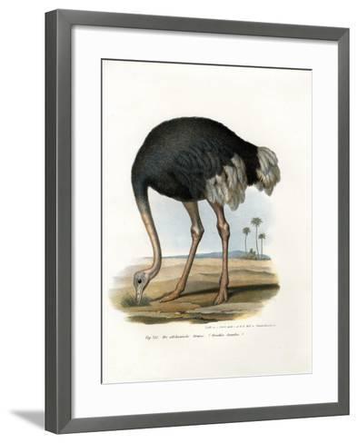 Ostrich, 1864--Framed Art Print